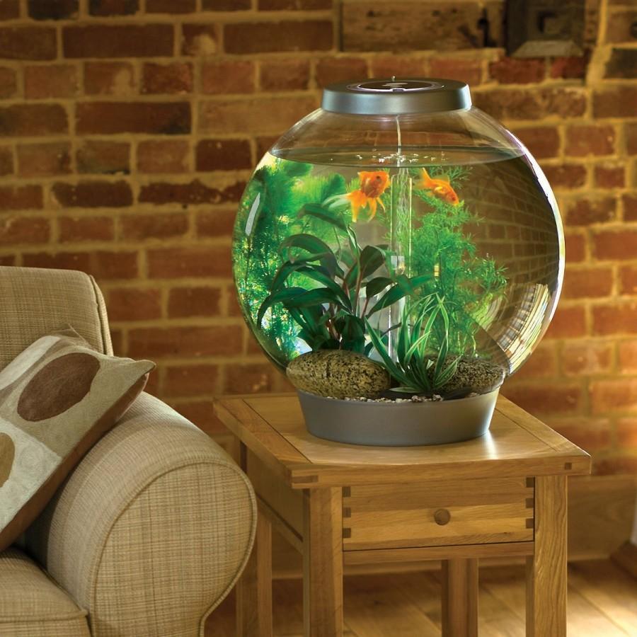 маленький круглый аквариум